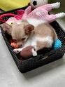 Mon nouveaux chien  14680610