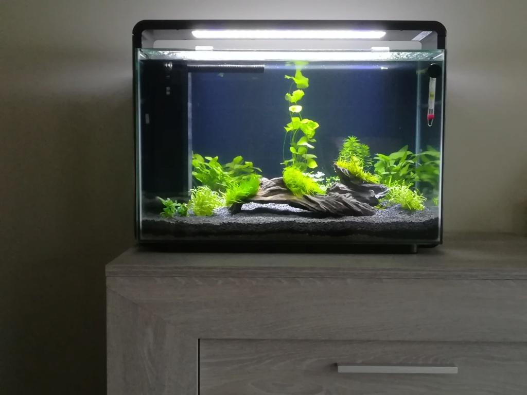 Superfish Home 60 Img_2029