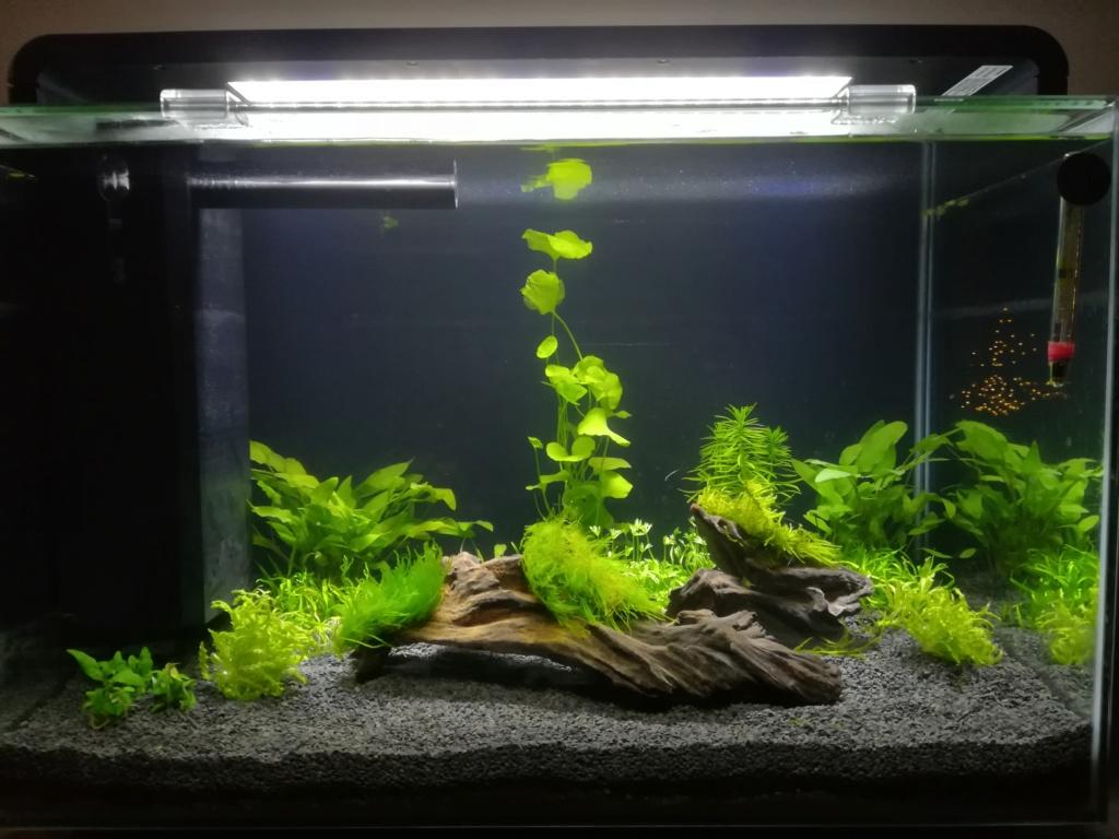 Superfish Home 60 Img_2030