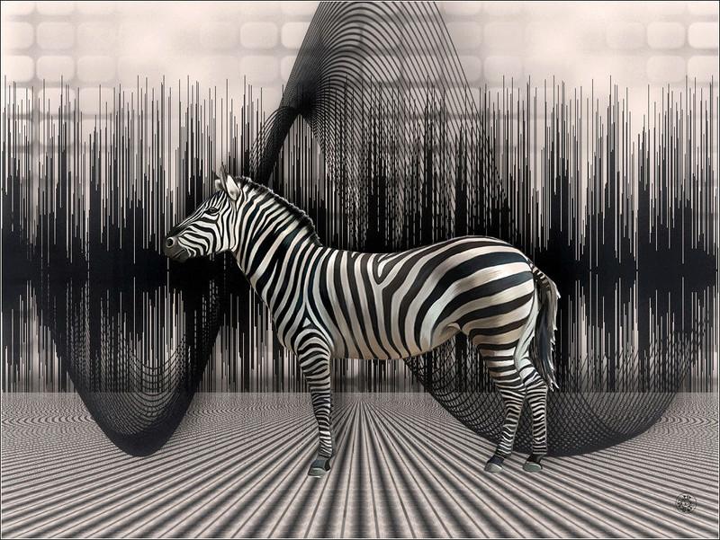 Créations Graphiques de 2016 - Page 4 Zebra10