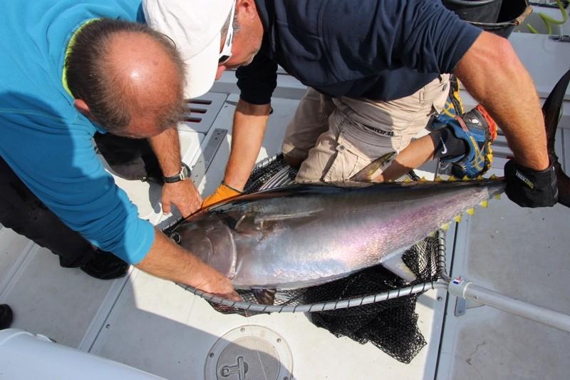 Sortie pêche au thon du 24 septembre 2016 Img_5218