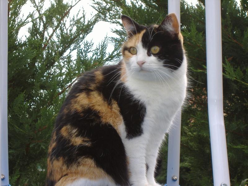 Nellya, née en 1999 Dscf0811