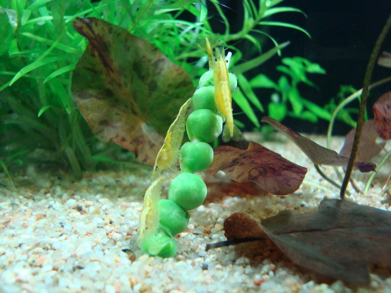 Ce post pour des photos marrantes de vos aquariums Dsc09210