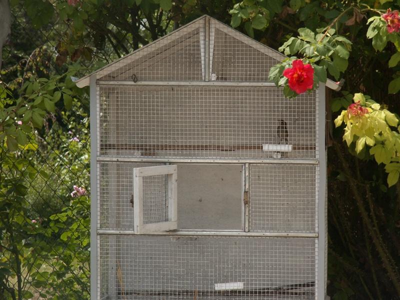 Moineau Domestique 08_08_14