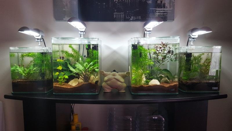 Mes aquariums de betta splendens - Page 2 20160914
