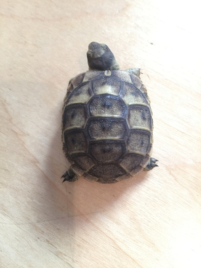 Identification de deux tortues juvéniles Img_3220