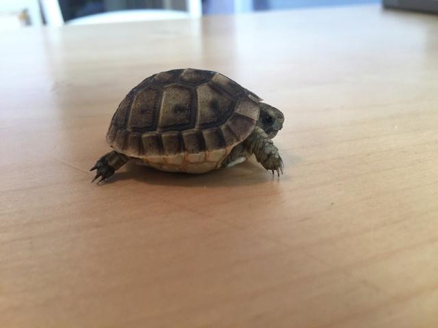 Identification de deux tortues juvéniles Img_3221