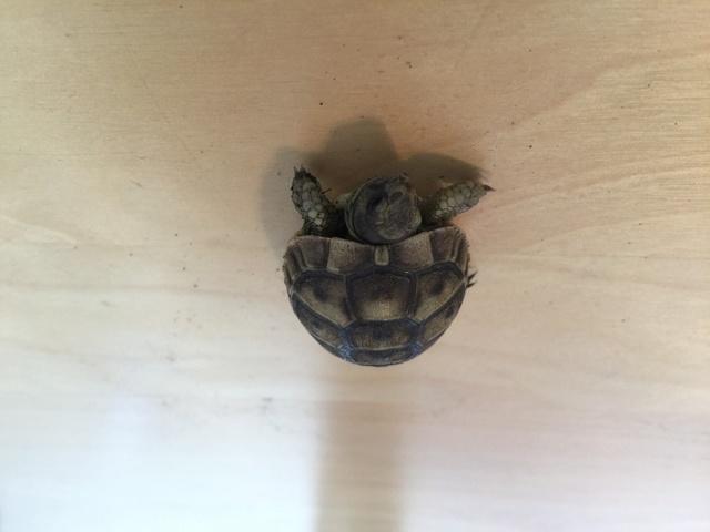 Identification de deux tortues juvéniles Img_3222