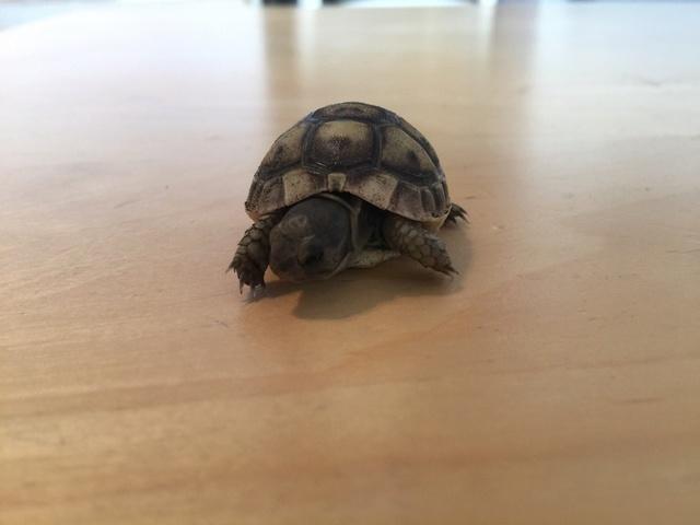 Identification de deux tortues juvéniles Img_3226