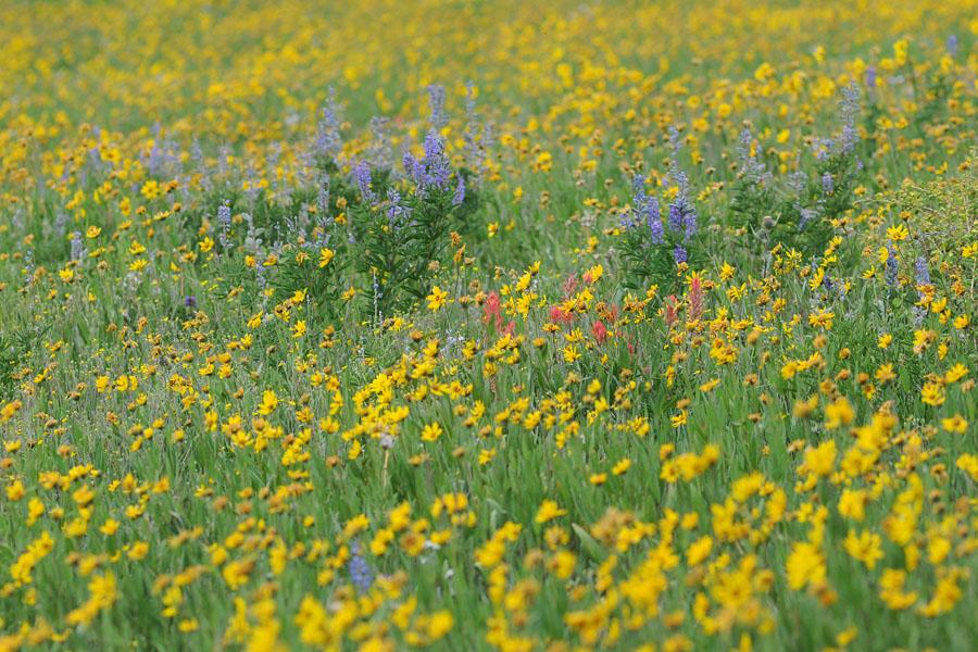 [USA] Orchidées et paysages de l'ouest américain - Page 3 Dsc_0317