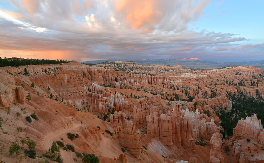 [USA] Orchidées et paysages de l'ouest américain - Page 3 Jlr_8910