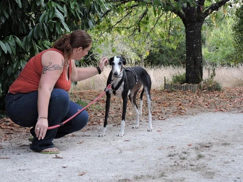 Careta grande galga noire et blanche, bientôt 6 ans.Scooby France  Adoptée  - Page 5 Careta10