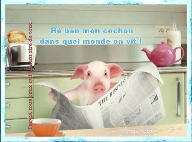 humour - Page 6 14199612
