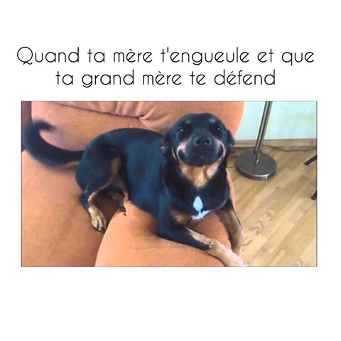 humour - Page 21 14333110