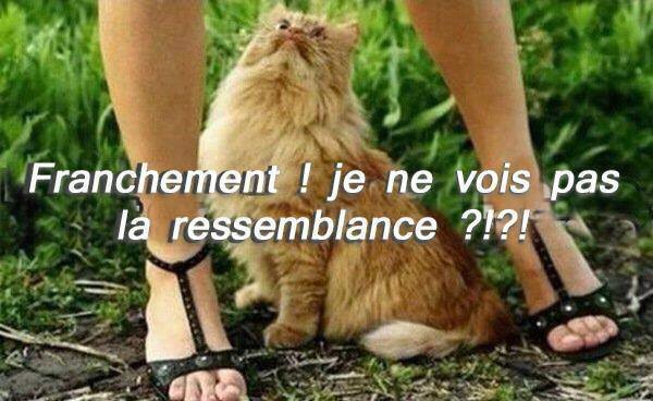 humour - Page 4 14517611
