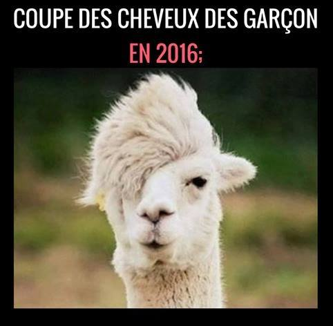 humour - Page 40 14568210