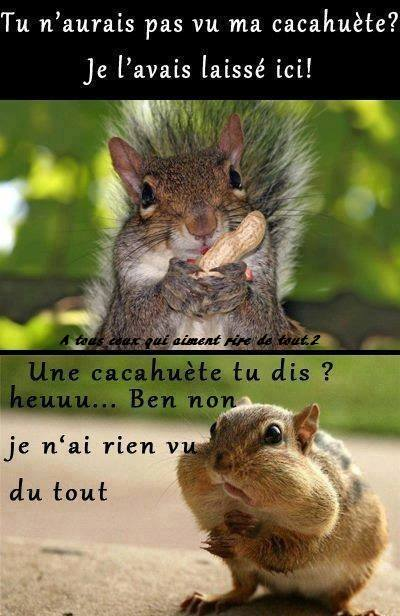 humour - Page 5 14595611