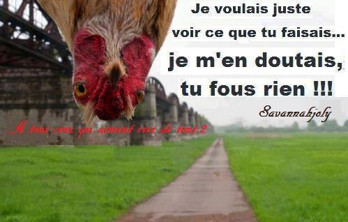 humour - Page 4 14606311