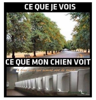 humour - Page 4 14641810