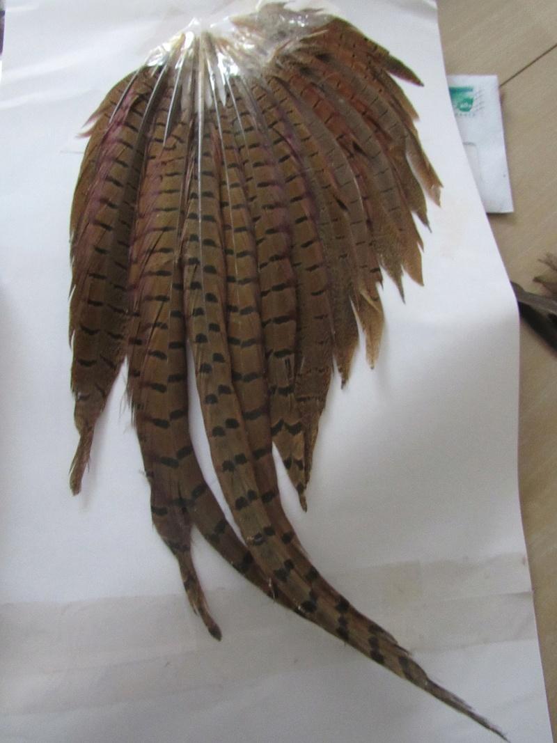 Trouvailles de plumes - Page 39 Img_9111