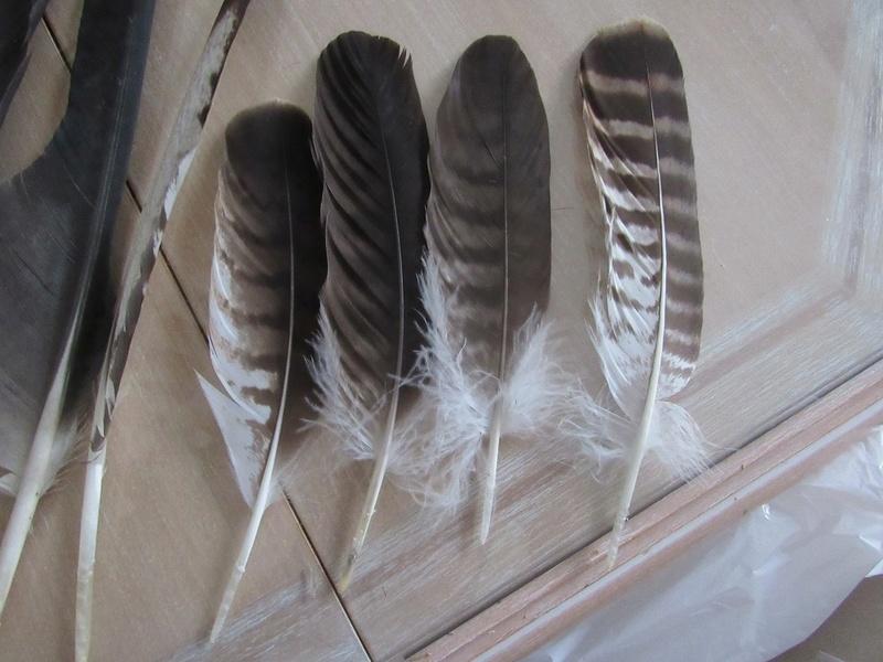 Trouvailles de plumes - Page 39 Img_9114