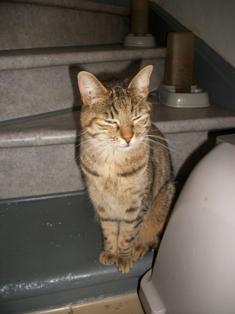 jagna, jolie tigrée née le 10 avril 2014 Imgp0030