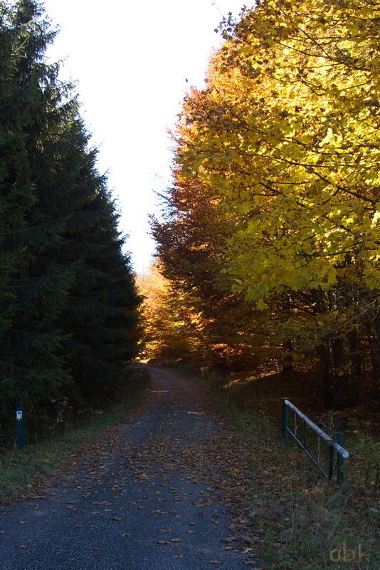 La Rothlach - Champ du feu ( 30.10.16 ) Chemin10