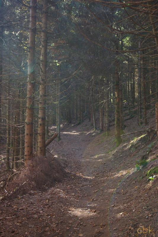 La Rothlach - Champ du feu ( 30.10.16 ) Chemin11