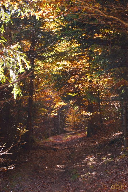 La Rothlach - Champ du feu ( 30.10.16 ) Chemin12
