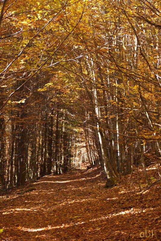 La Rothlach - Champ du feu ( 30.10.16 ) Chemin14