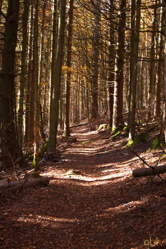 La Rothlach - Champ du feu ( 30.10.16 ) Chemin15