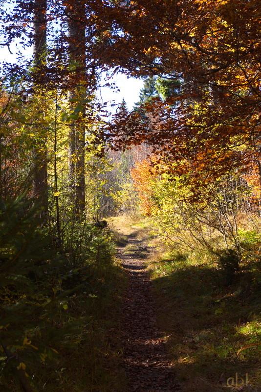 La Rothlach - Champ du feu ( 30.10.16 ) Chemin16