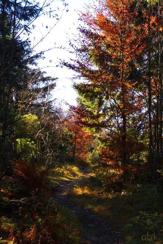 La Rothlach - Champ du feu ( 30.10.16 ) Chemin17