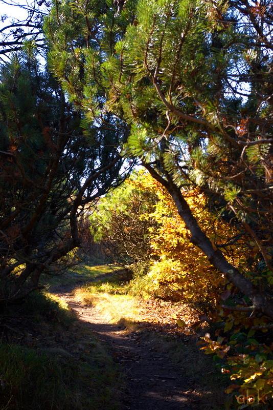 La Rothlach - Champ du feu ( 30.10.16 ) Chemin18