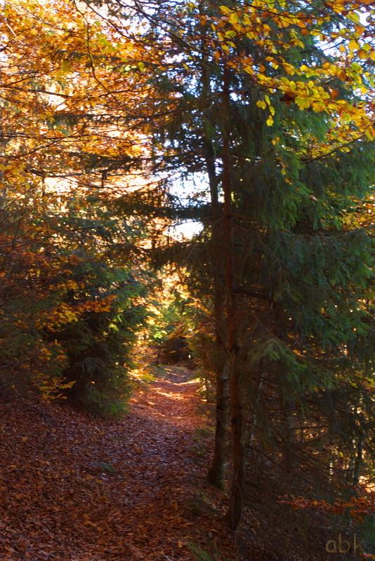 La Rothlach - Champ du feu ( 30.10.16 ) Chemin20