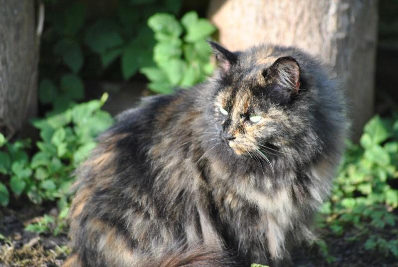 Kitty Cat, née le 1er août 2010 STATUT :CHAT LIBRE - Page 3 Dsc_0020