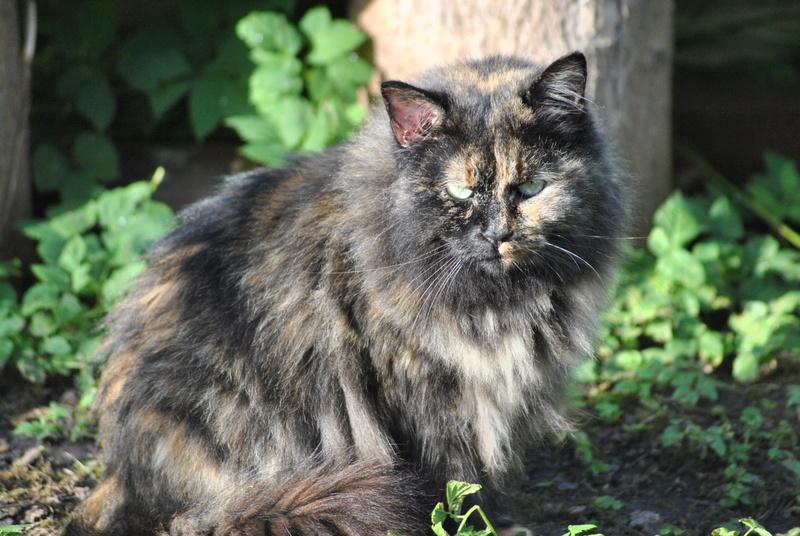 Kitty Cat, née le 1er août 2010 STATUT :CHAT LIBRE - Page 3 Dsc_0021