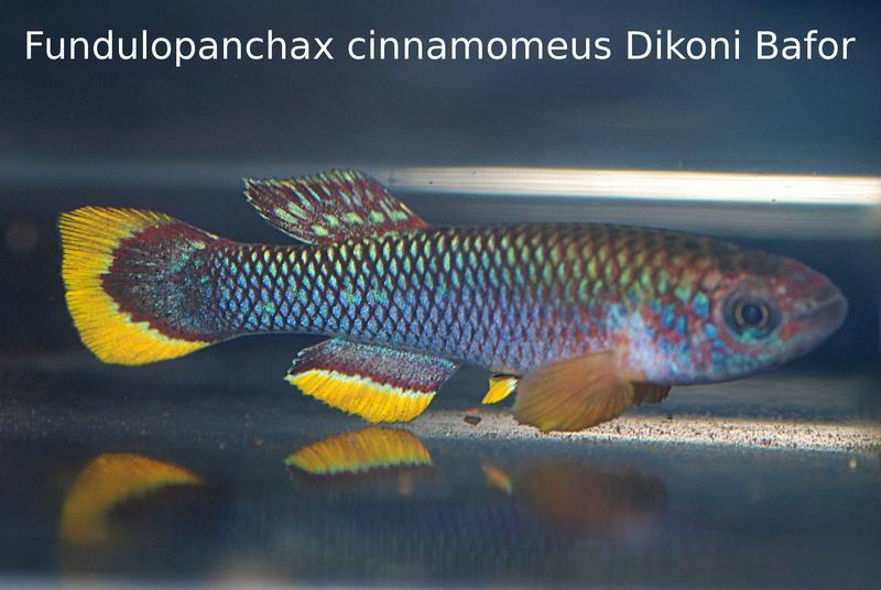 Photos des poissons du congrès KCF 2016 1-111