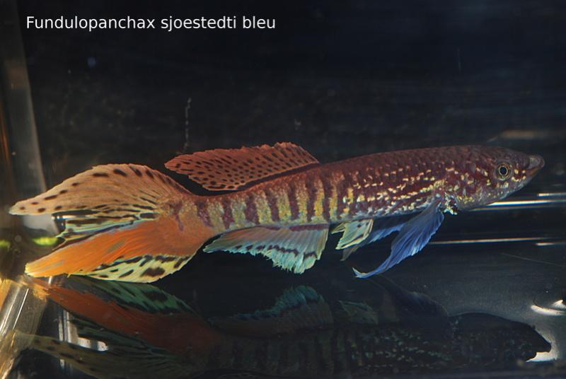 Photos des poissons du congrès KCF 2016 1-1810