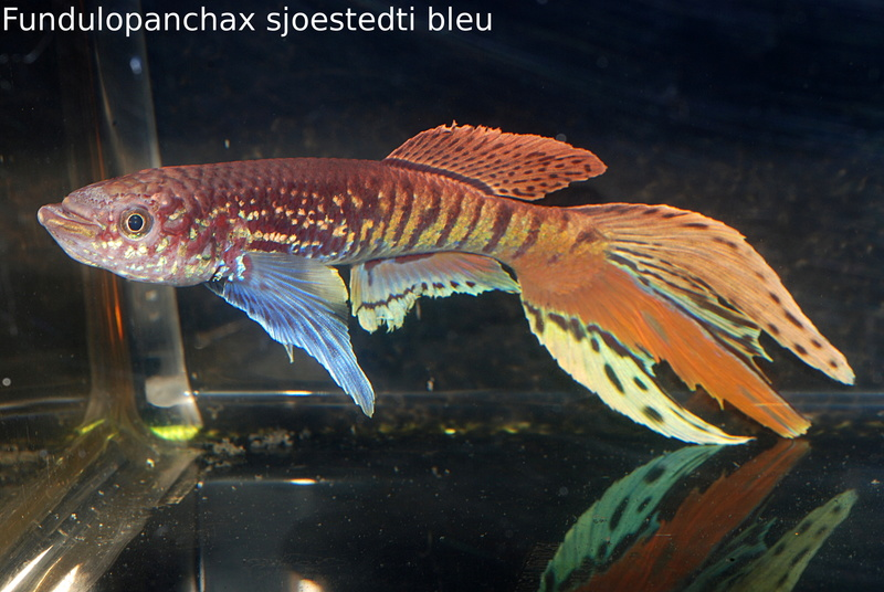 Photos des poissons du congrès KCF 2016 1-18_10