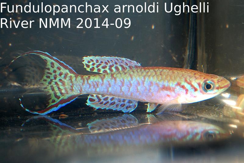 Photos des poissons du congrès KCF 2016 1-2510