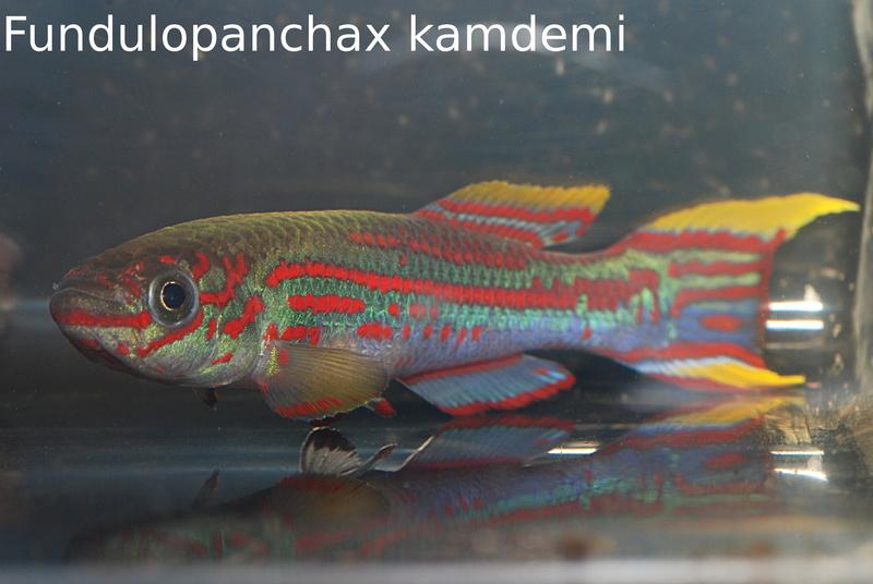 Photos des poissons du congrès KCF 2016 1-2610