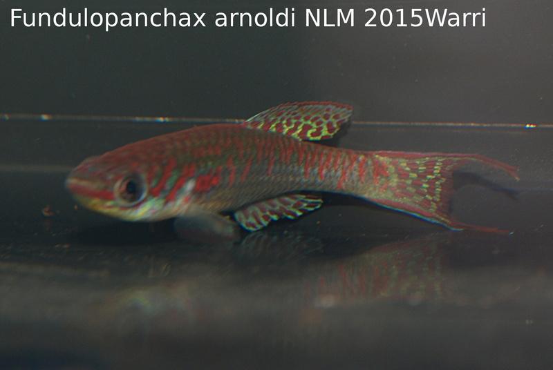 Photos des poissons du congrès KCF 2016 1-311