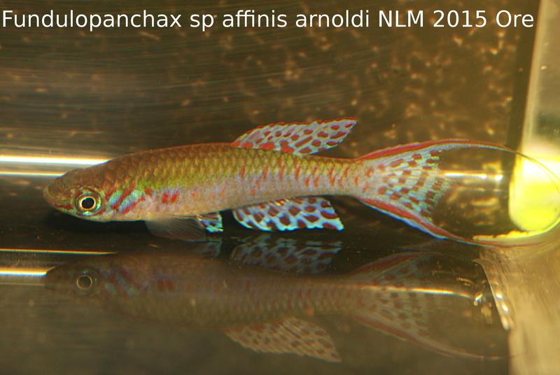 Photos des poissons du congrès KCF 2016 1-511