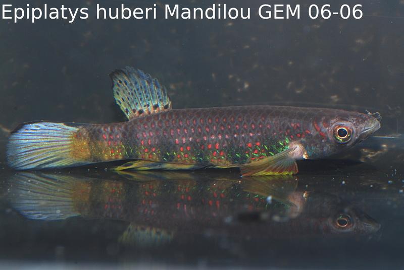 Photos des poissons du congrès KCF 2016 10-1510