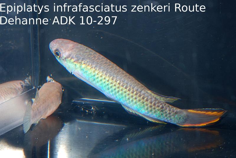 Photos des poissons du congrès KCF 2016 10-2310