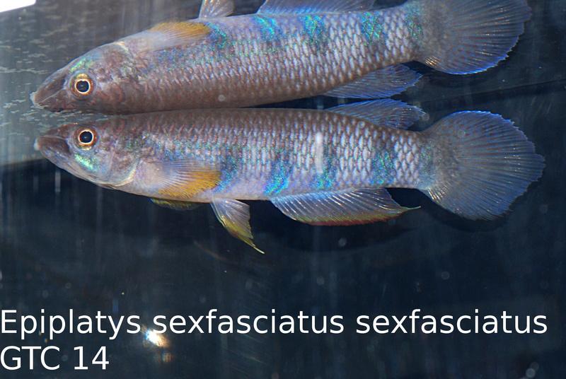 Photos des poissons du congrès KCF 2016 10-2610