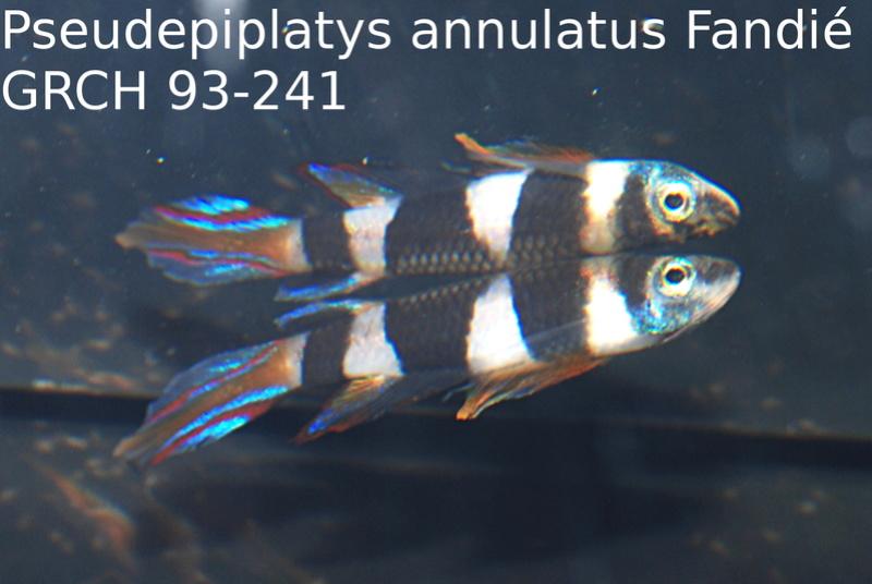 Photos des poissons du congrès KCF 2016 10-410