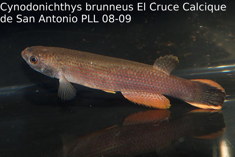 Photos des poissons du congrès KCF 2016 11-1310