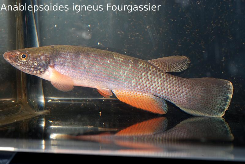 Photos des poissons du congrès KCF 2016 11-1410